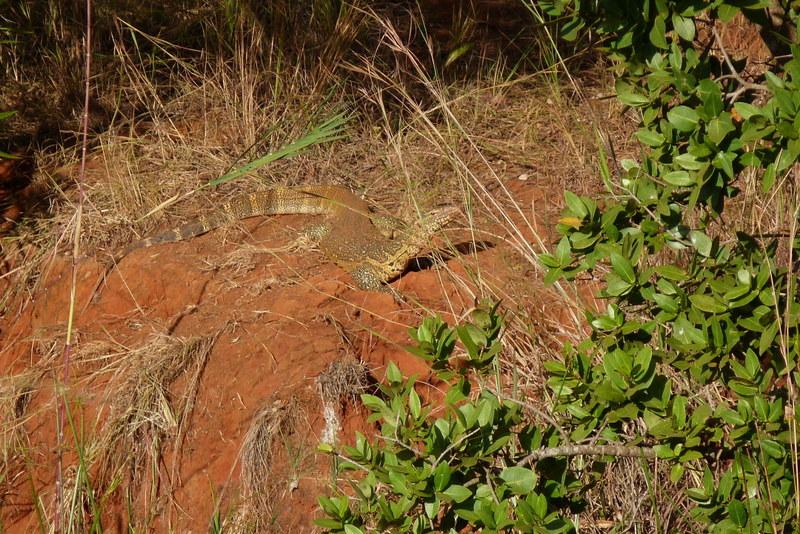 Südafrika und Swasiland Overland. suedafrika staedtereisen sonne safari afrika  P1090239