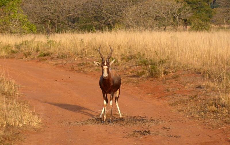 Südafrika und Swasiland Overland. suedafrika staedtereisen sonne safari afrika  P1090322