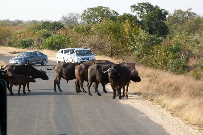 Südafrika und Swasiland Overland. suedafrika staedtereisen sonne safari afrika  P1090622
