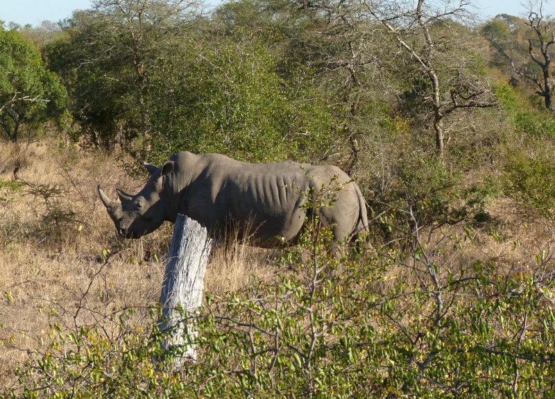 Südafrika und Swasiland Overland. suedafrika staedtereisen sonne safari afrika  P1090853