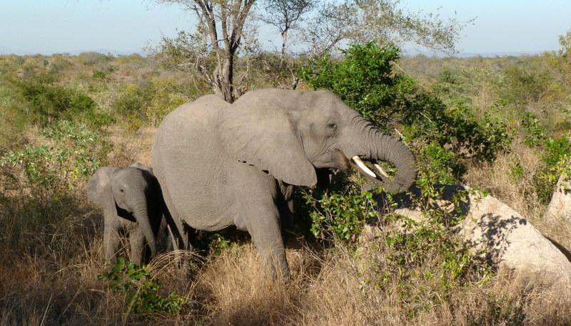 Südafrika und Swasiland Overland. suedafrika staedtereisen sonne safari afrika  P1090885