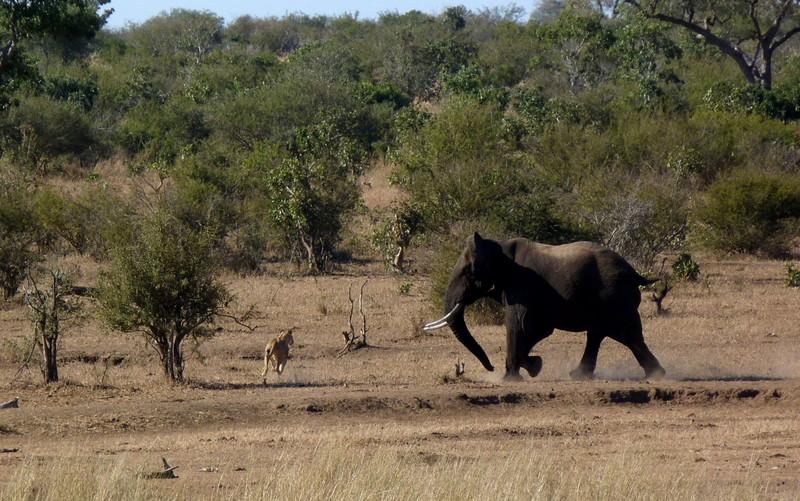 Südafrika und Swasiland Overland. suedafrika staedtereisen sonne safari afrika  P1100119