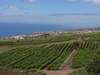 Teneriffa und La Gomera europa  Weinberge der Bodegas Monje
