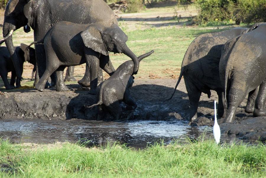 Mit Gebeco von Namibia über den Chobe National Park zu den Viktoriafällen sonne simbabwe safari land und leute namibia botswana afrika  bot elefant10 1