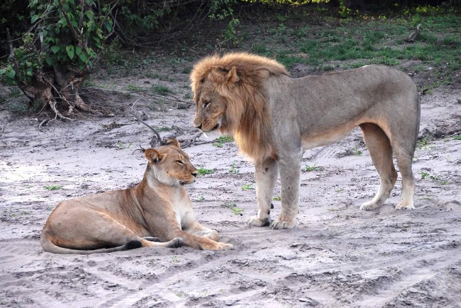 Mit Gebeco von Namibia über den Chobe National Park zu den Viktoriafällen sonne simbabwe safari land und leute namibia botswana afrika  dsc 2880