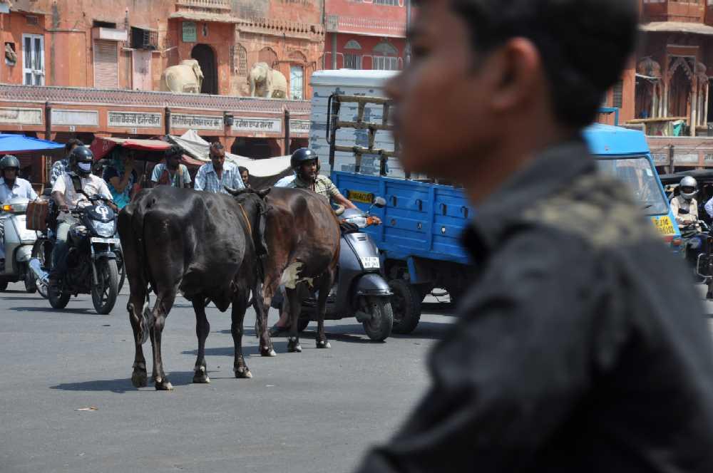 Indien und die Paläste der Maharajas staedtereisen sonne indien asien  markt2kuehe